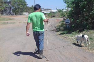 Zoonoses faz socialização de cães para adoção