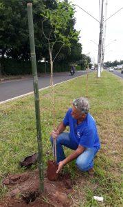 Avenida 80-A recebe plantio de mudas de ipê-mirim