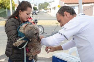 Campanha de vacinação antirrábica tem mais de 400 animais vacinados