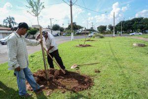 Prefeitura plantou mais de 17 mil árvores em dois anos